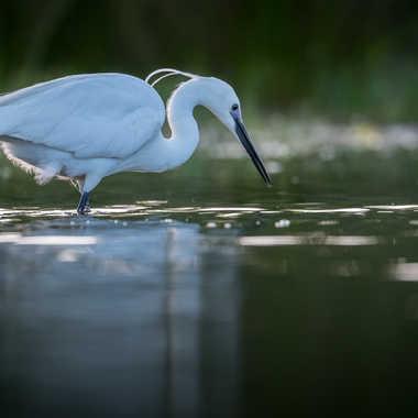 La chasseresse de l'étang par jeromebouet