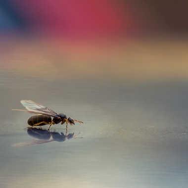 Reflet d'insecte par Dav.sv