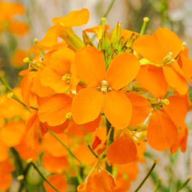 fleurs oranges par brj01