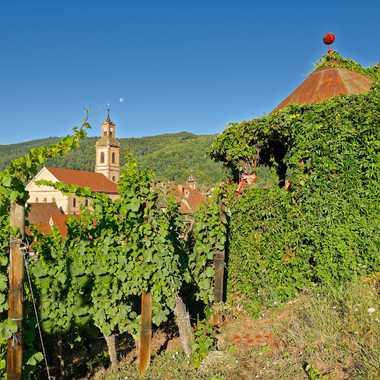 Riquewhir depuis les vignes par Jean_FAGA