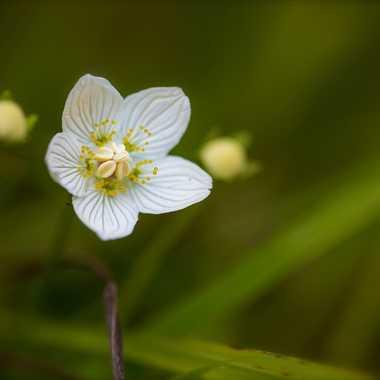 Petite fleur par Guy07