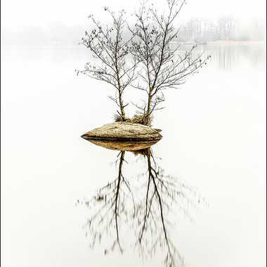 brouillard sur l'étang par grd24ra