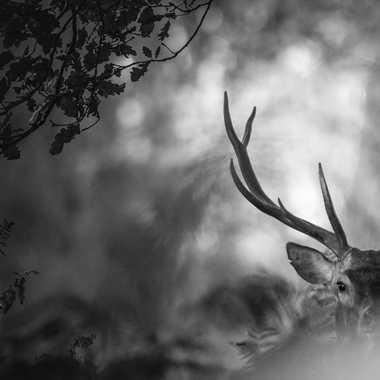 Mon beau roi par julien_86