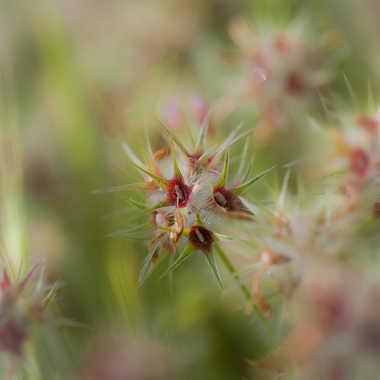 fleur de trèfle par genevieve_3824