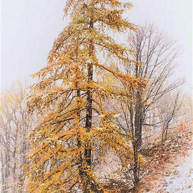 Première neige par Farim