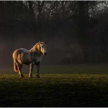 Le cheval .. par grd24ra