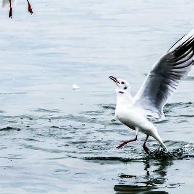 Marche sur l'eau par Patrick Gonthier