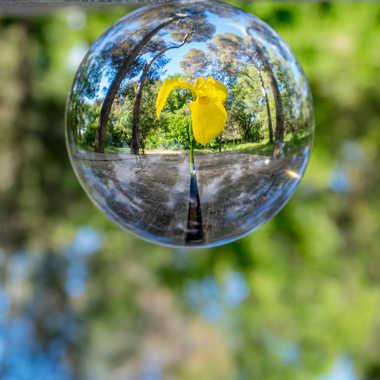 Forest ball. par Franck06