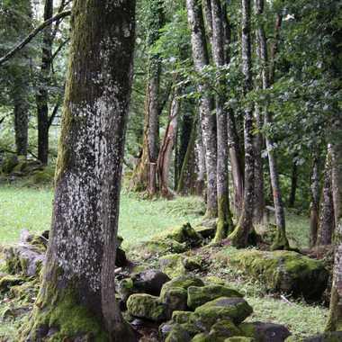 ....Promenons-nous dans les bois.... par Maridan