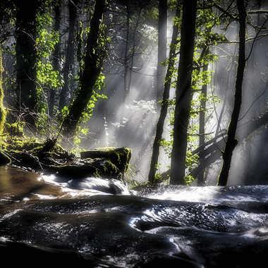 Dans la Comté, les hobbits veillent par Valérie Tirard