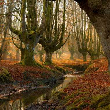 Forêt de hêtres têtards par kaiku_7