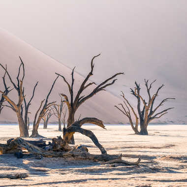 Le ballet des arbres morts par Jeananne