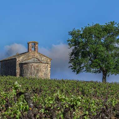 Paysage viticole en Beaujolais par patrick69220