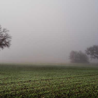 Brouillard de Noel par Buissem