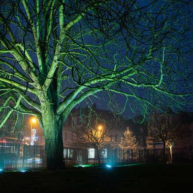 L'arbre vert par bobox25