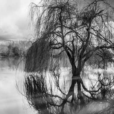 Le monstre du lac par sylmorg