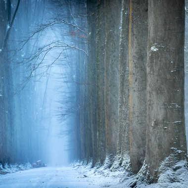 matin gelé par Morgane Donceel