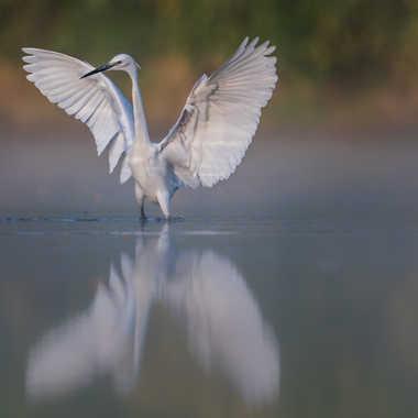 Haut les ailes ! par jeromebouet