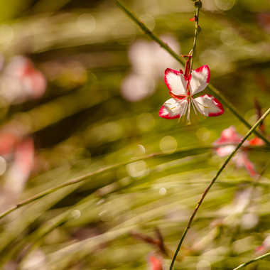 Petite fleur  par brj01
