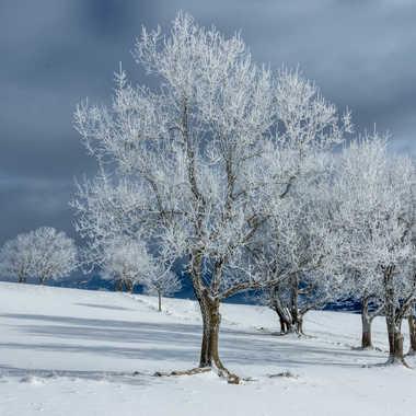 manteau blanc par philphilou74