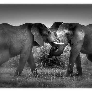 Eléphants d'Afrique par patrick69220