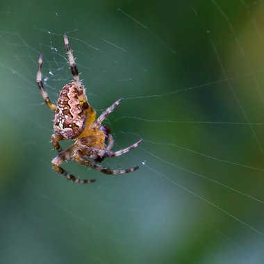 Spider!! par jean-Luc