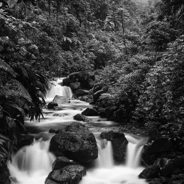 En forêt tropicale. par patrick69220