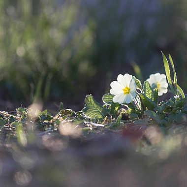 Le printemps est arrivé par patrick69220