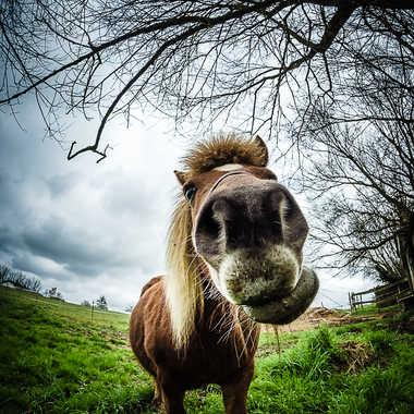 Jpeux pas j'ai poney... Hein? par FotoPatPicxl
