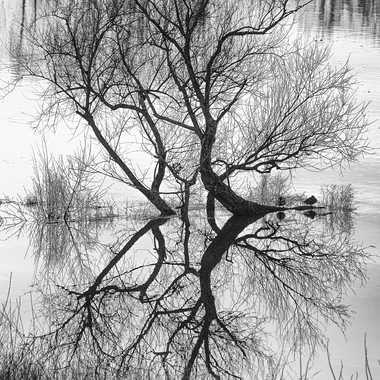 Sur la Loire par dc16