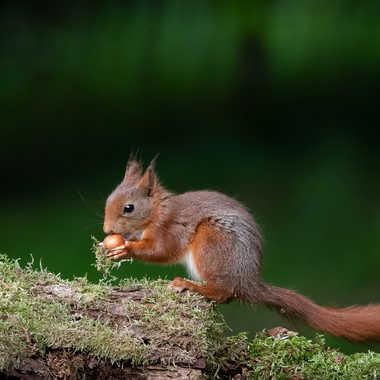 le petit gourmand par patouphoto