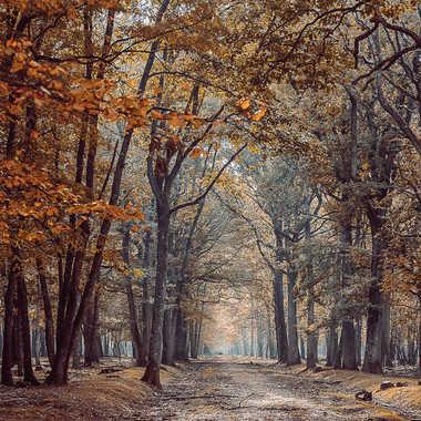 Forêt automnale par MusePhotographies