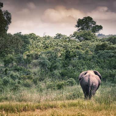 Terre Africaine par patrick69220