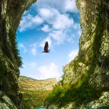 le vautour du Verdon par Jeremy_7517