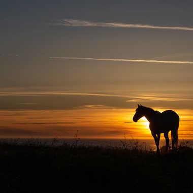 cheval, soleil couchant par TACHET