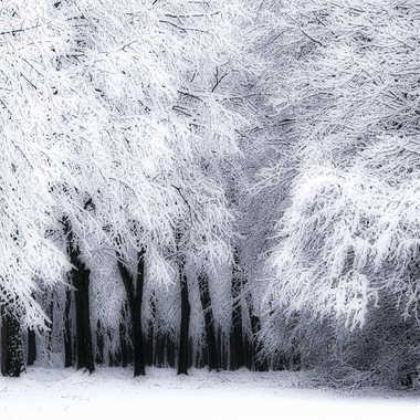 Paradis blanc par pitchou