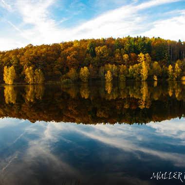 Bois dans le lac par Mullerpatrick_photographie
