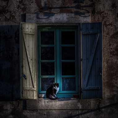 The Cat & The Blue Windows par FredoRoiDuVelo
