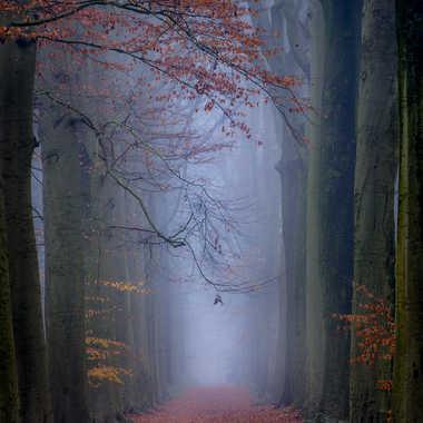 Les dernières couleurs de l'automne... par marc_1328