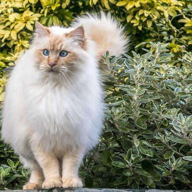 Mister Cat par sylmorg