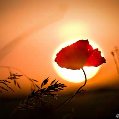 Soleil rouge ! par lolo27