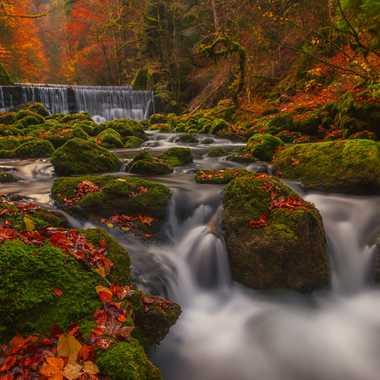 Les couleurs de l'automne par Andrea_Zehnder