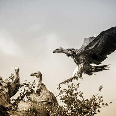 Oiseaux de morts. par patrick69220