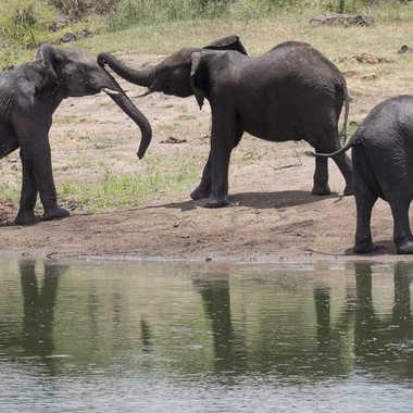 Scène de vie chez les éléphants par patrick69220