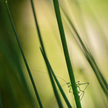 Coucou... par Nikon78