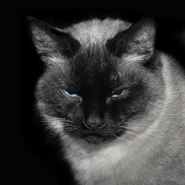 Pensées félines par lynx
