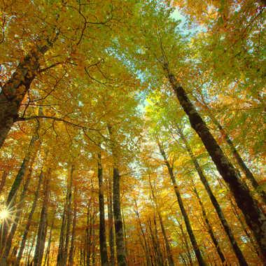 Douceur d'automne par Farim