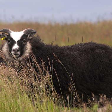 Caché dans les herbes par bobox25