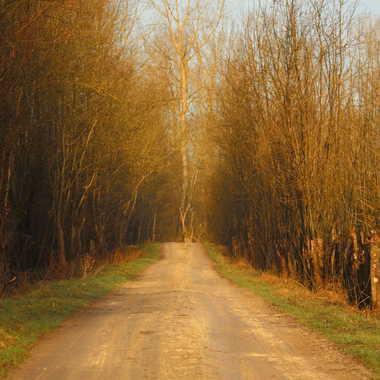 Chemin blanc par aym.b
