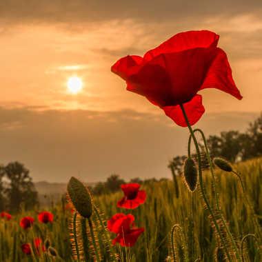Au soleil  de fin de journée par Florent-Thierry